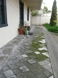 whalebone sidewalk