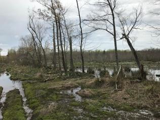 Zekiah Swamp